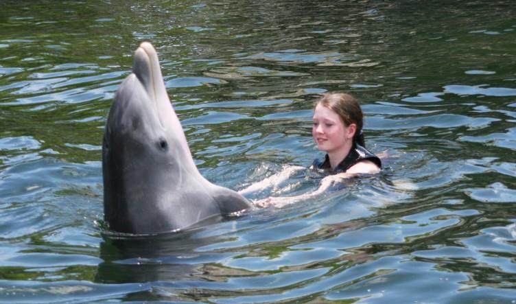 delfiner-florida-3