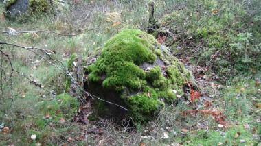 Norges natur er appetitlig, men med få råd, er den danske det også