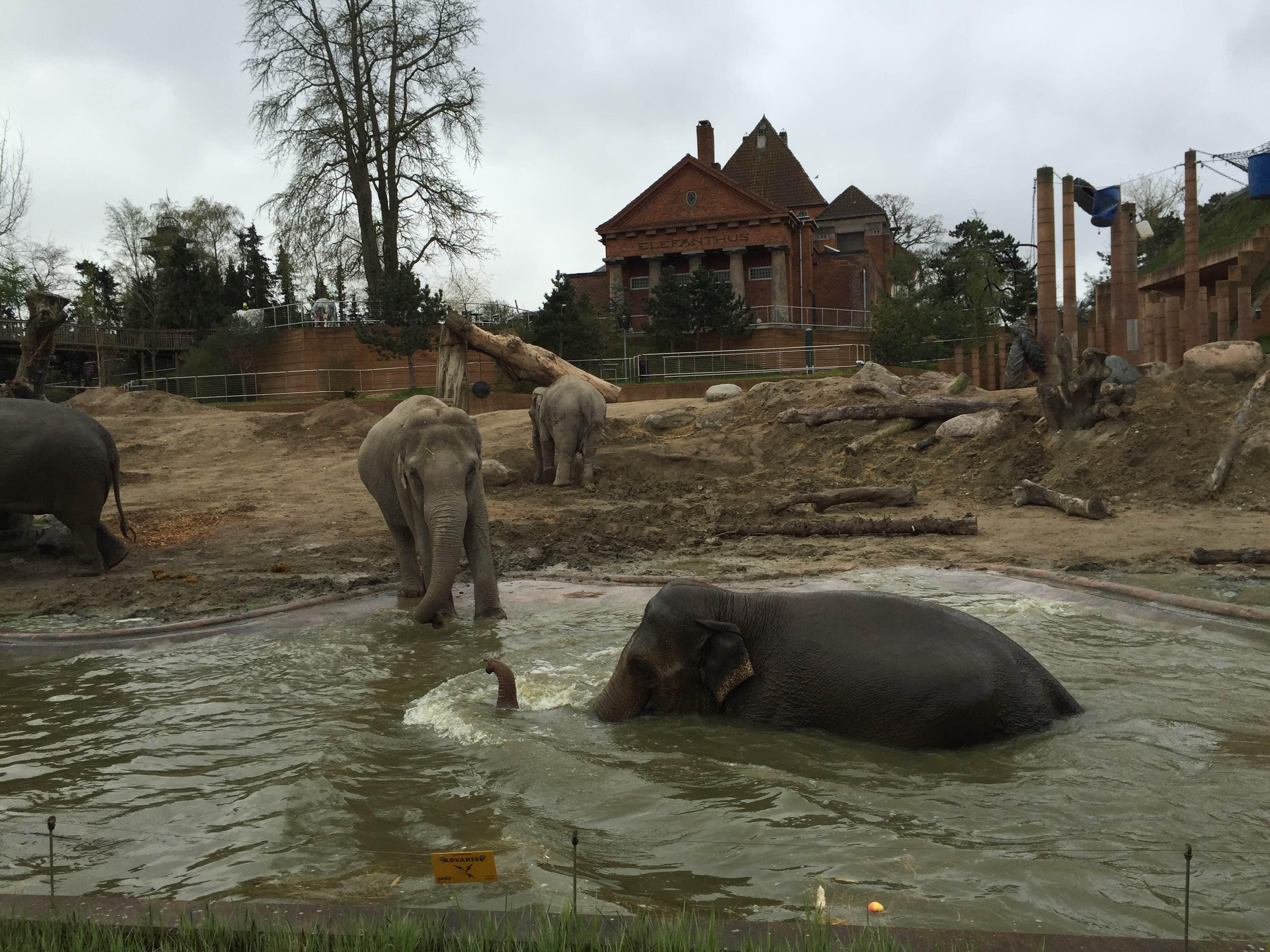hoppende elefant