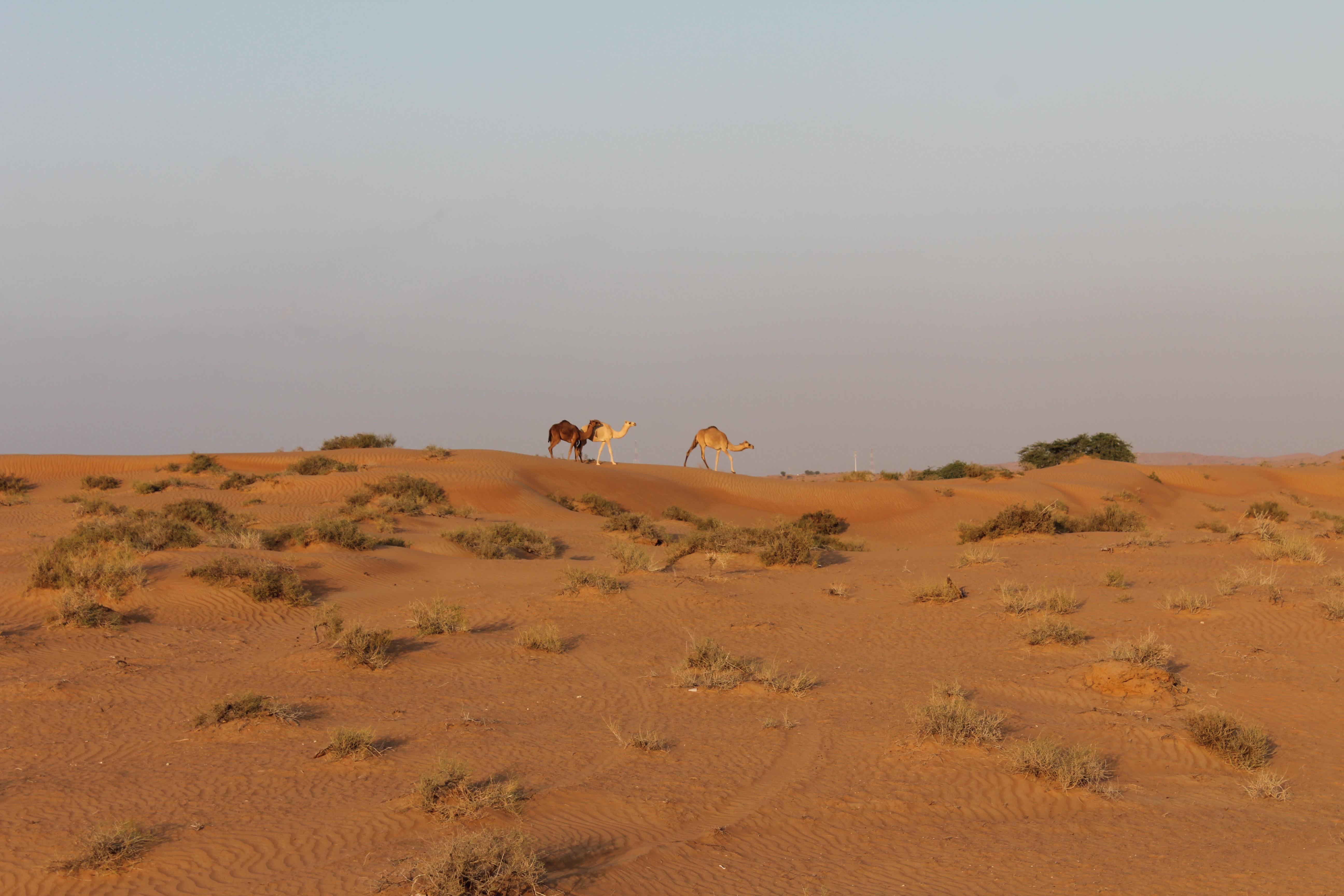 ørkenen Gemmer På Gratis Oplevelser Børneferie